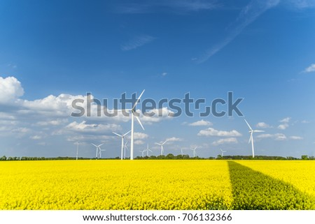 Wind turbines in a rapeseed field with blue sky and clouds