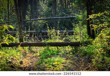 Windbreak. Forest road with fallen trees. Broken tree as damage from a storm in a forest. - stock photo