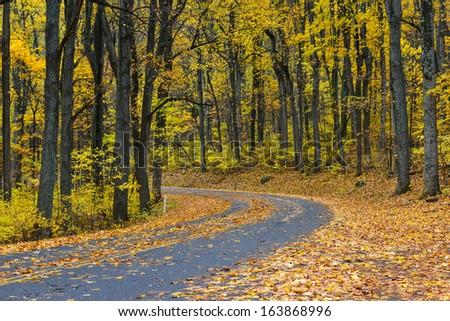 Winding asphalt road with autumn foliage - Shenandoah National Park, Virginia United States  - stock photo