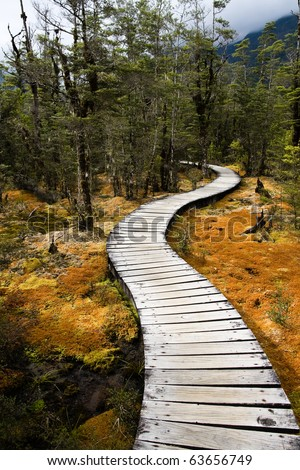 Winding forest wooden pathway, milford  track, new zealand - stock photo
