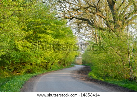 winding road in green forest - stock photo