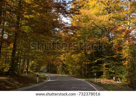 winding run in the autumn atmosphere
