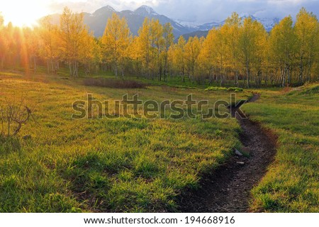Winding trail through an aspen forest, Utah, USA. - stock photo
