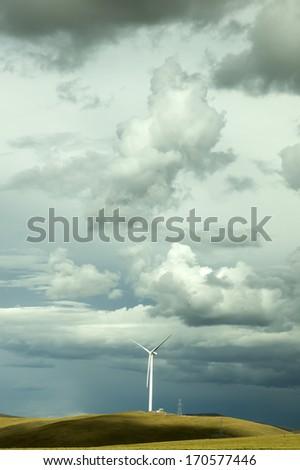 Windmill grass - stock photo