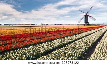 Windmill on field of tulips in Netherlands. Header for website - stock photo