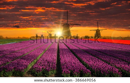Windmill with beautiful tulip field during sunset in Holland. - stock photo