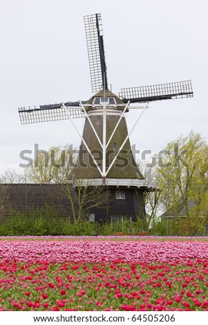 windmill with tulip field, Holwerd, Netherlands - stock photo
