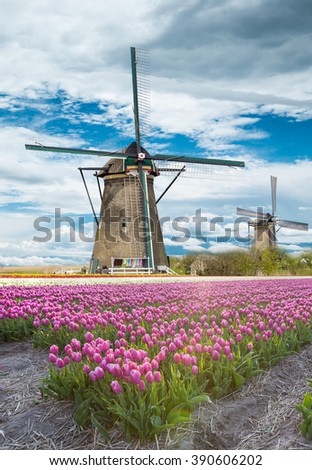 Windmill with tulip field in Holland - stock photo