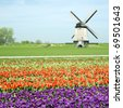 windmill with tulip field near Schermerhorn, Netherlands - stock photo