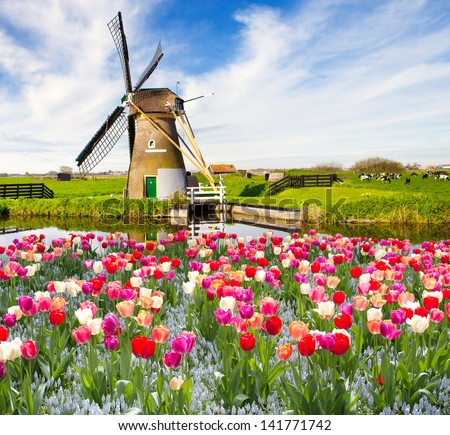 Windmill with tulips in Holland - stock photo