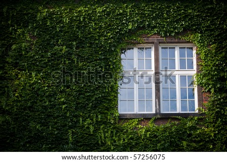 window covered with ivy - stock photo