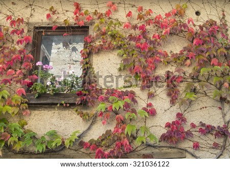 Window of an old white house at medieval village Perouges in France with colorful lianas climbing up the wall