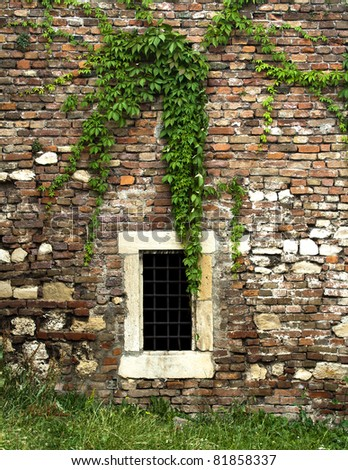 window old plant background with stone wall - stock photo
