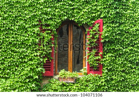 Window with creeper and red shutters in Certaldo (Florence, Tuscany, Italy) - stock photo