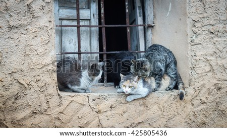 Window with domestic cats in the act of mating - stock photo