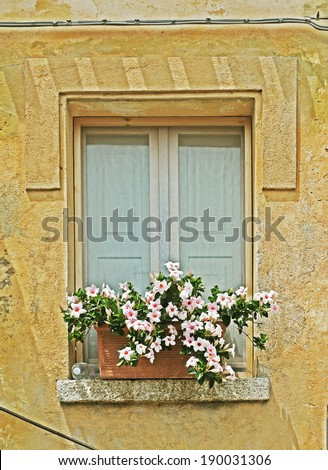 window with flower pot in a yellow wall