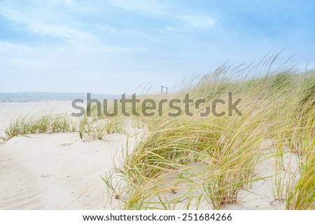Windswept beach, typical Cape Cod coastal environment. - stock photo