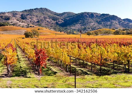 Wine Country, Napa Valley Vineyards in Autumn Red and Yellow