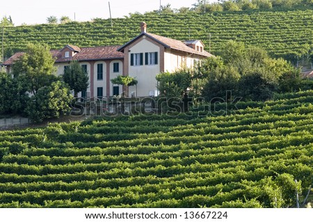 wine farm in Piemonte, Italy - stock photo