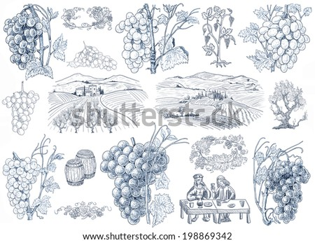 Wine illustration - stock photo