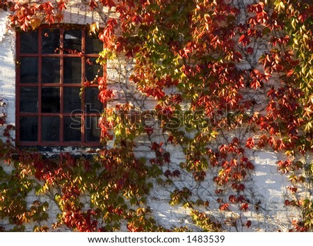Wine plant with red autumn leaves climbing brick wall. Jutland Denmark. Red iron window, beautiful colors. - stock photo