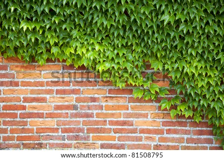 Wine plants at a brick wall