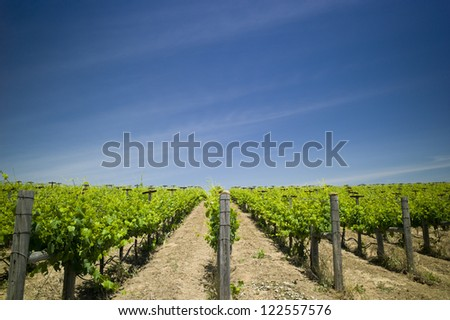 winery in napa valley - stock photo