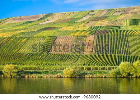 Wineyards at the Mosel - stock photo
