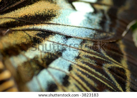 wing close-up of a butterfly - stock photo