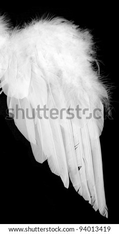 Wing from white feather - stock photo