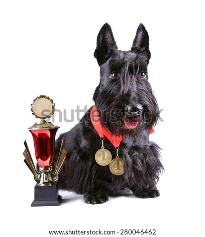 Winner black dog with cup and gold medals on a white background - stock photo