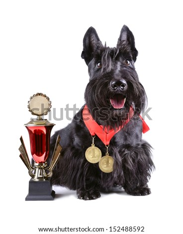Winner dog with cup and gold medals on a white background - stock photo