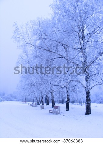 Winter alley with trees - stock photo