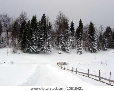 winter and forest