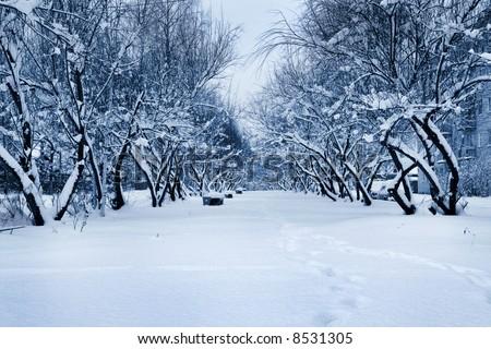 Winter avenue - stock photo