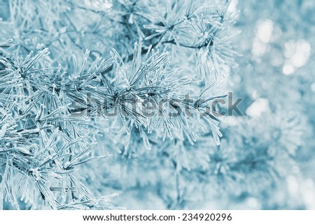 winter background from pine tree covered with hoarfrost, frost or rime in a snowy forest, lovely landscape of nature  - stock photo
