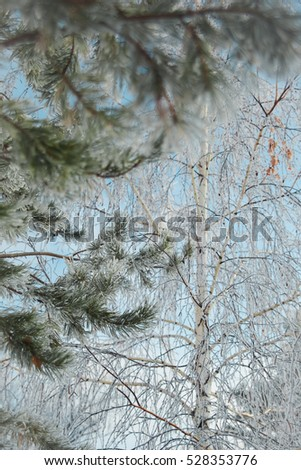 Winter background: frost branches close up, cold weather