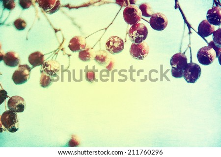Winter background, red berries on the frozen branches covered with hoarfrost - stock photo