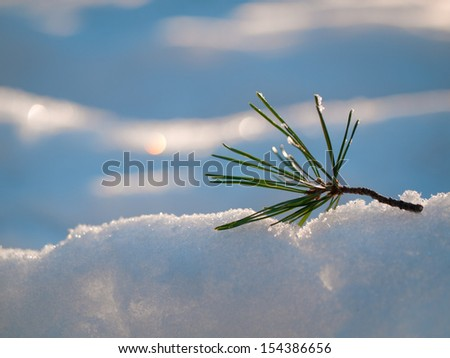 Winter background: snow and sun. - stock photo
