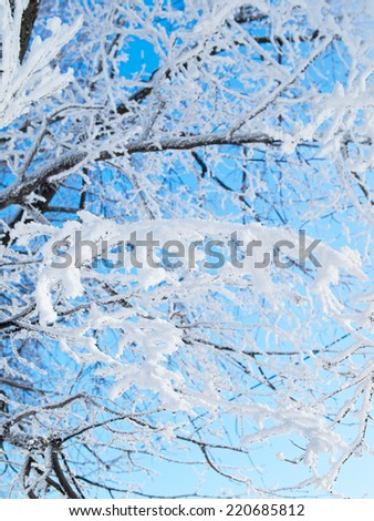 Winter background. Snowflakes on the white snow. - stock photo