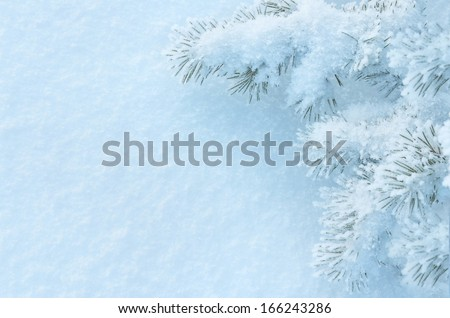 Winter background with a snow-covered tree - stock photo