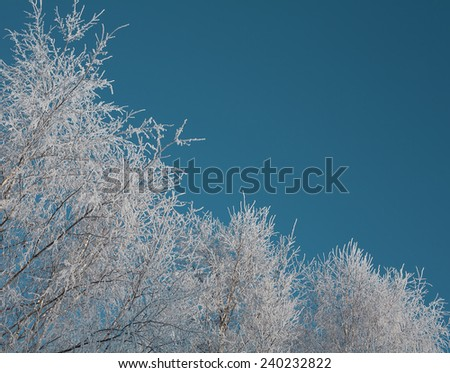 Winter background with birch branches covered hoarfrost on turquoise sky background