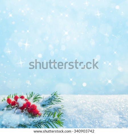 Winter background with branches of spruce and bunch of rowan - stock photo