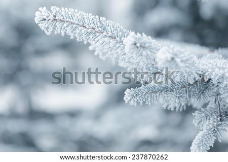 winter background with frosty fir branches, copy space on the left - stock photo