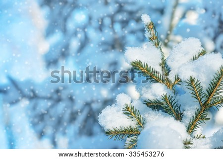 Winter background with snow-covered fir-tree branches - stock photo