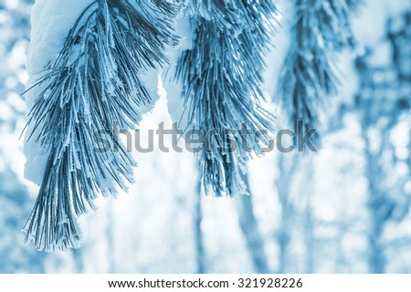 Winter background with snowy pine branches - stock photo