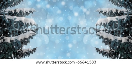 winter background with spruce tree covered with snow - stock photo