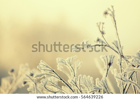 Winter backgrounds, Wallpaper. Snowy trees in the background of the misty dawn a frosty morning..