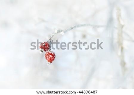 winter berry - stock photo