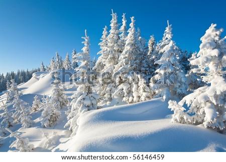 winter calm mountain landscape with beautiful fir trees  on slope (Kukol Mount, Carpathian Mountains, Ukraine) - stock photo
